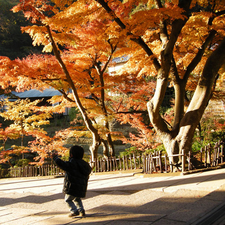 20081203_engakuji8