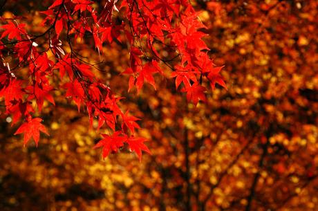 20081206_01_kakuonji2
