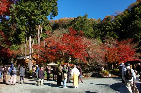20081206_01_kakuonji6