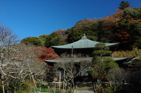 20081206_02_zuisenji1