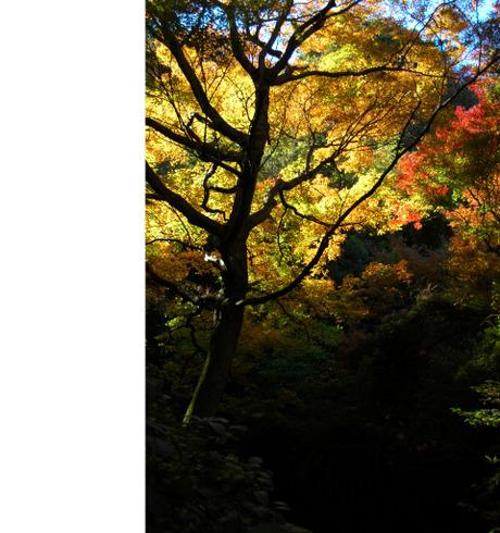 20081206_02_zuisenji3