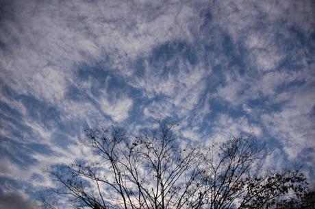 20081209_sky