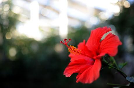 20081227_flowercenter3