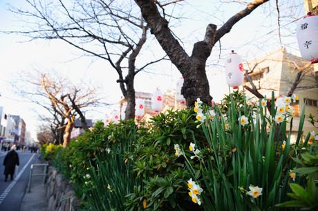 20090101_04_wakamiyaoji3