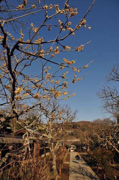20090112_tokeiji3