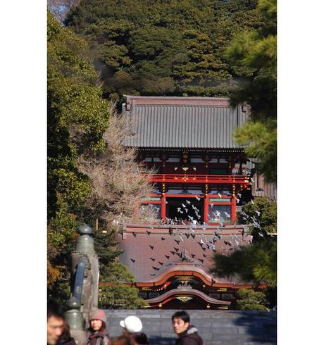 20090125_tsuruhachi