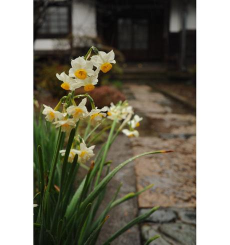 20090130_kaizoji2_2