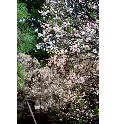 20090209_houkaiji1_2