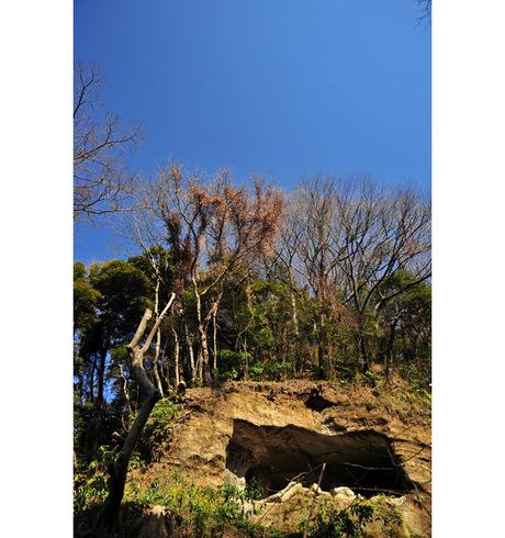 20090210_asahina1