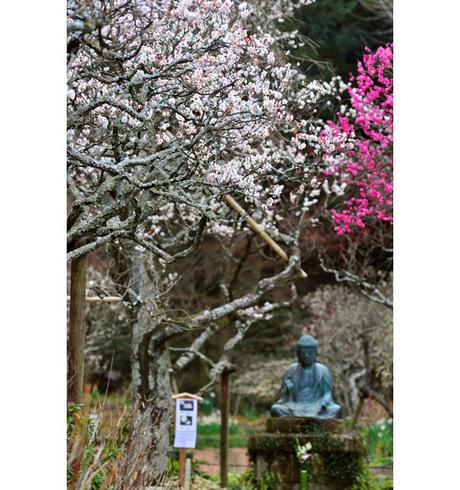 20090211_tokeiji1