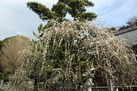 20090215_joryuji2