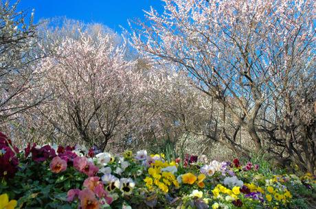 20090220_kajiwara1