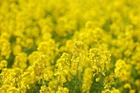 20090321_flowercenter3