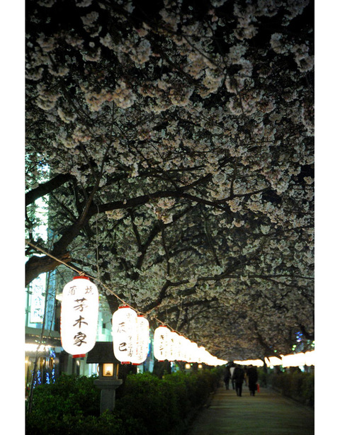 20090402_dankazura3