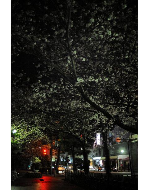 20090402_wakamiyaoji