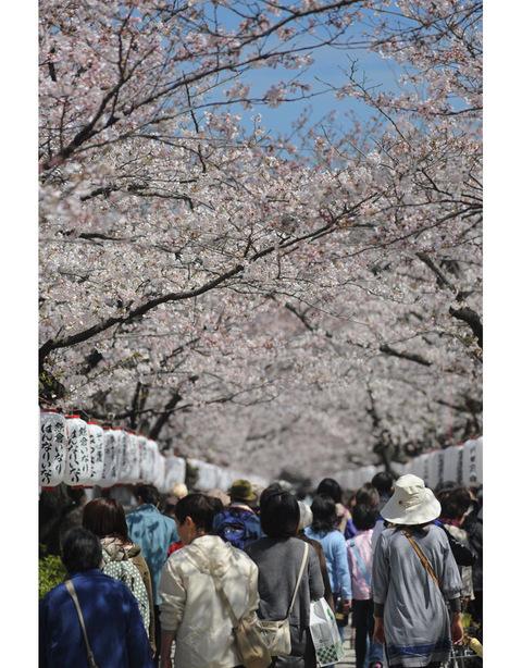 20090403_dankazura3_2