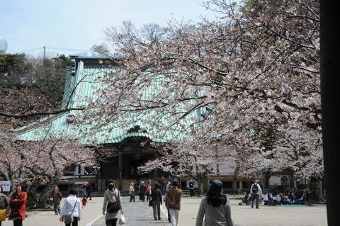 20090403_komyoji1