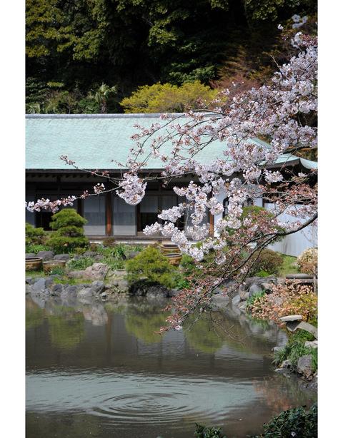 20090403_komyoji4