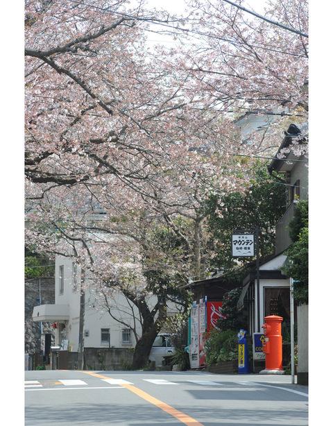 20090404_kamakurayama1