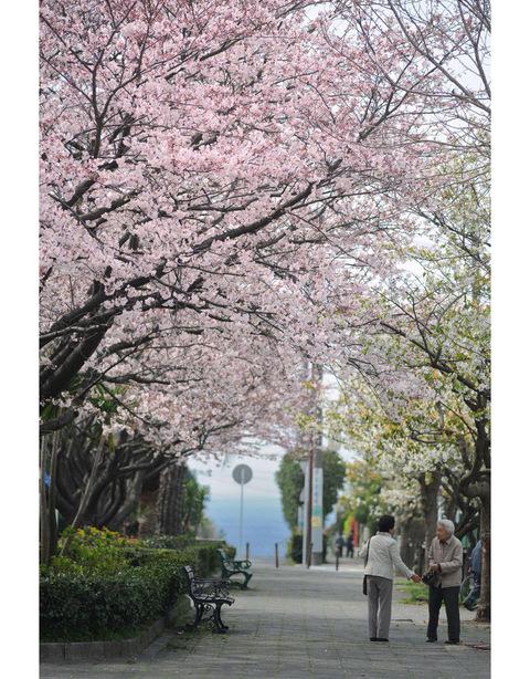 20090404_shichiri1