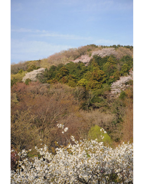 20090404_kamakura_park1_2