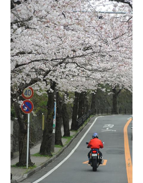 20090404_sakurayama