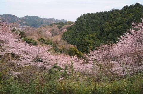 20090404_sakurayama_park1