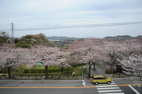 20090404_sakurayama_park2