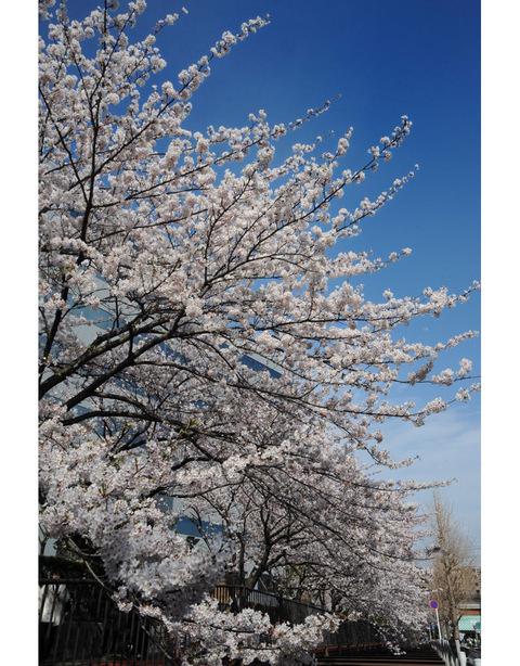 20090404_sunaoshi1
