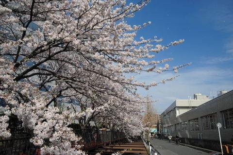 20090404_sunaoshi3