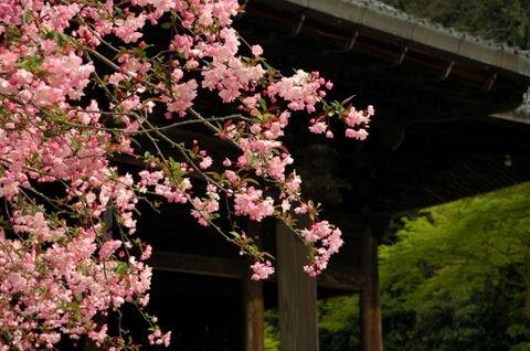 20090405_myohonji3