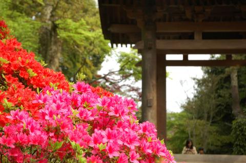 20090418_kaizoji6