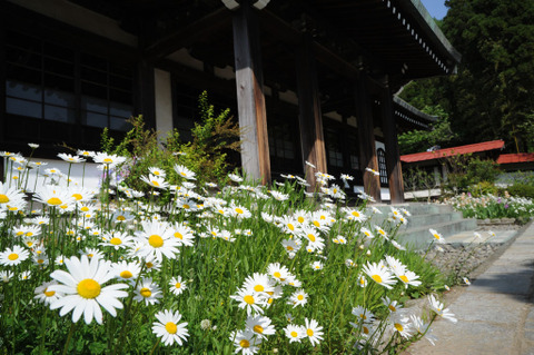 20090502_ryuhoji2