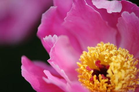 20090503_flowercenter3