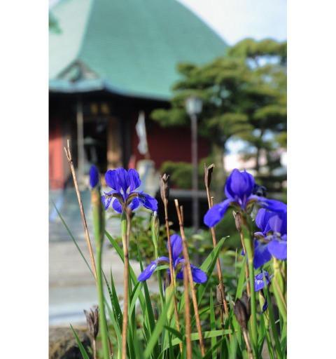 20090504_hongakuji1