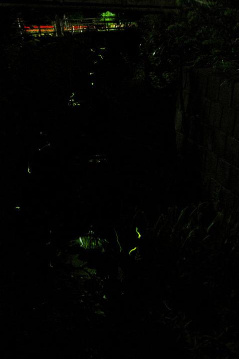 20090604_firefly2
