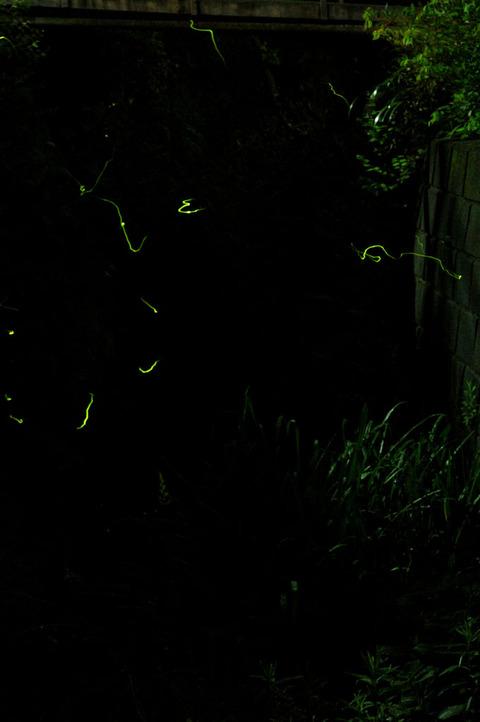 20090606_firefly2