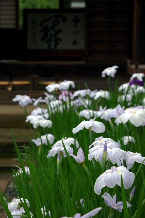 20090606_kaizoji1