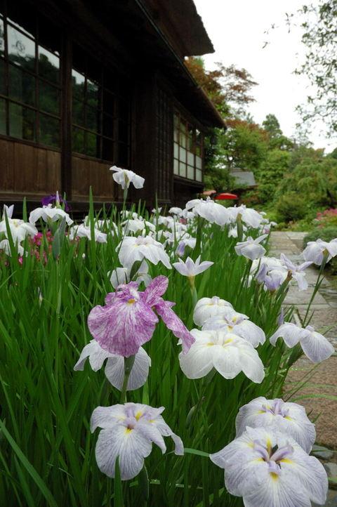 20090606_kaizoji2