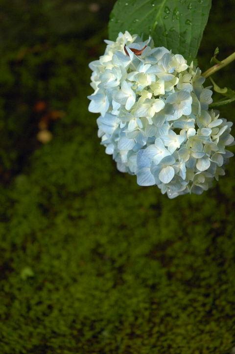 20090606_kaizoji3