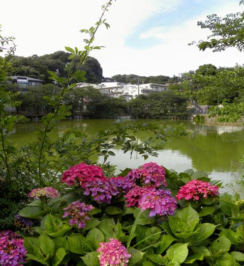 20090620_yatoike1