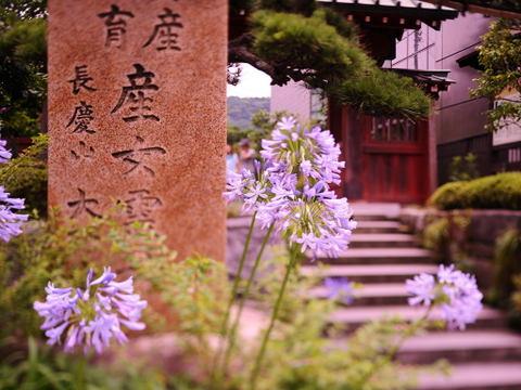 20090704_daikoji3