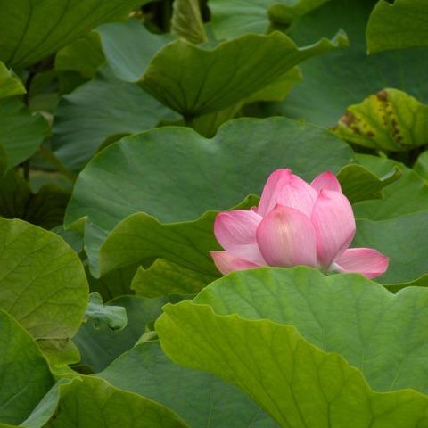 20090711_tsuruhachi2