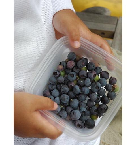 20090719_blueberry_2