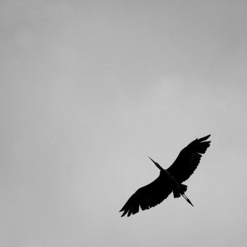 20090728_heron