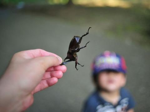 200907813_beetle2
