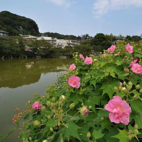20090822_yatoike1
