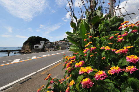 20090923_koshigoe5