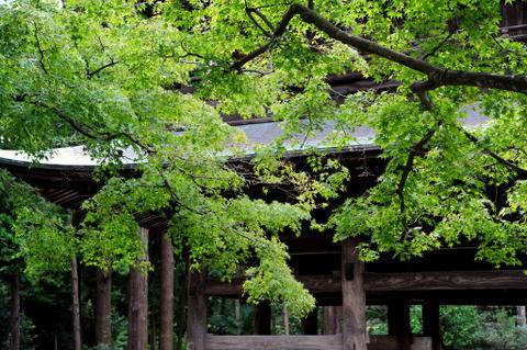 20091010_engakuji1