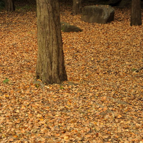 20091017_autumn